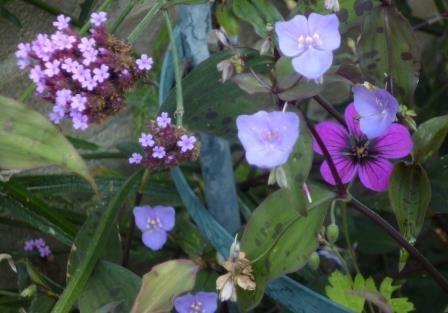 bruine vaas met okergele bloemen
